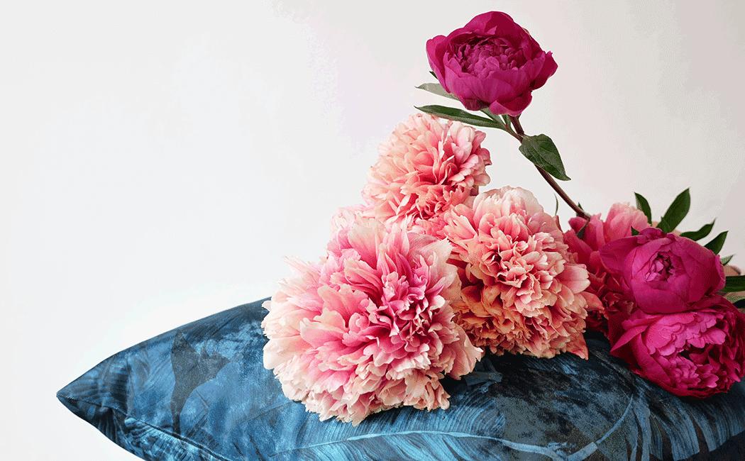 VONsociety: Pfingstrose Blume der Woche