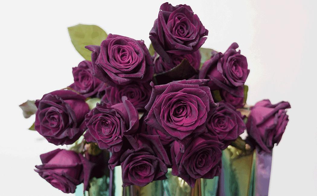 VONsociety: Schwarze Rose Black Baccara, Ansicht eines Blumenstraußes, von oben fotografiert © Zweigstelle